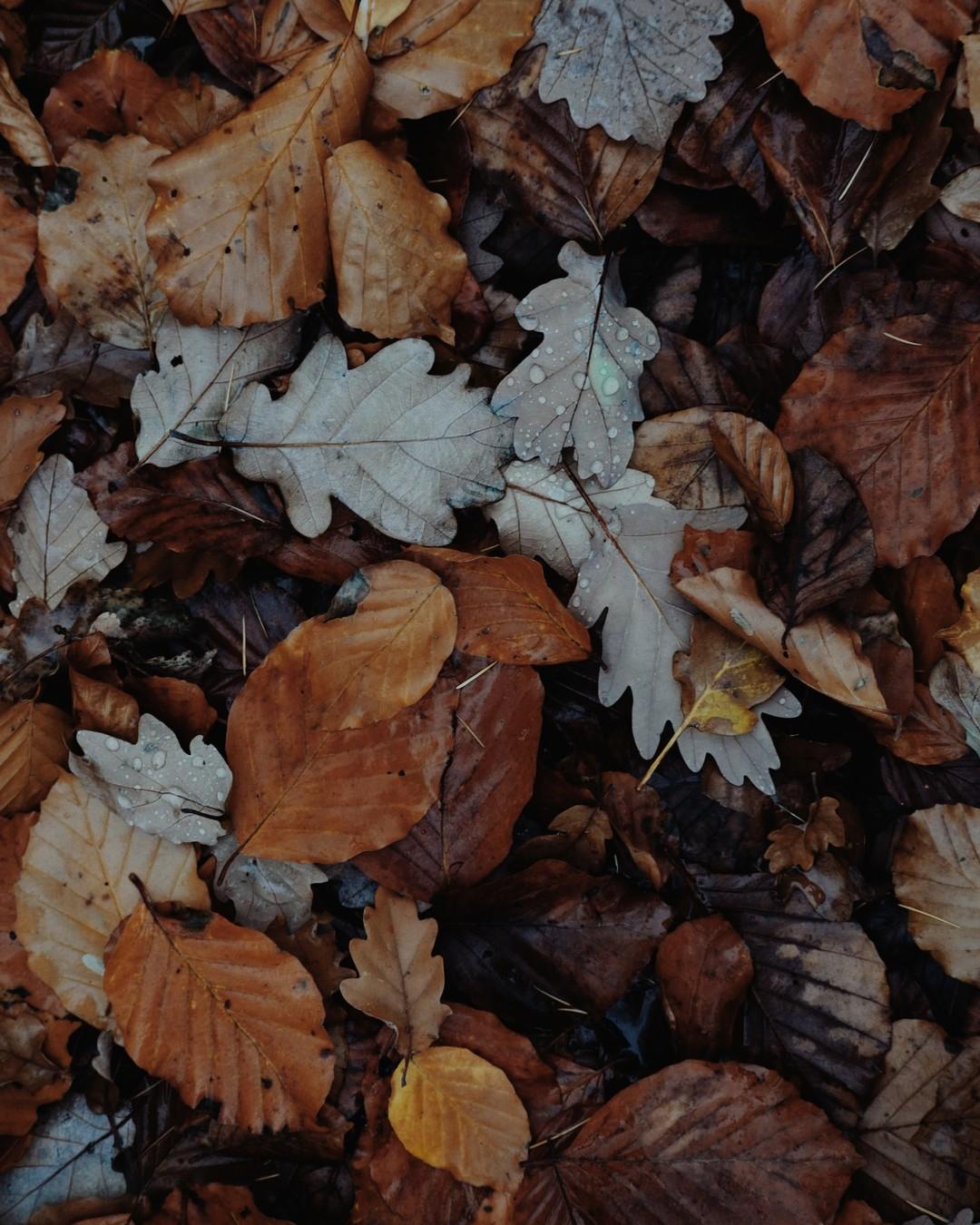 Teraz. #jesień #livethelittlethings #darlingweekend #folklife #hygge #mybeigelife #morningslikethese #slowlivingforlife #exploretocreate #momentslikethese #quietmoments #chasingseasons #kinfolk #toeachtheirpath #flashesofdelight #capturequiet #slowliving #cottagecore #seasonspoetry #visualstorytelling #slowautumndays #autumnmood #autumnaesthetic #autumn #cozyautumn #cosyhome #autumnvibes #journaling