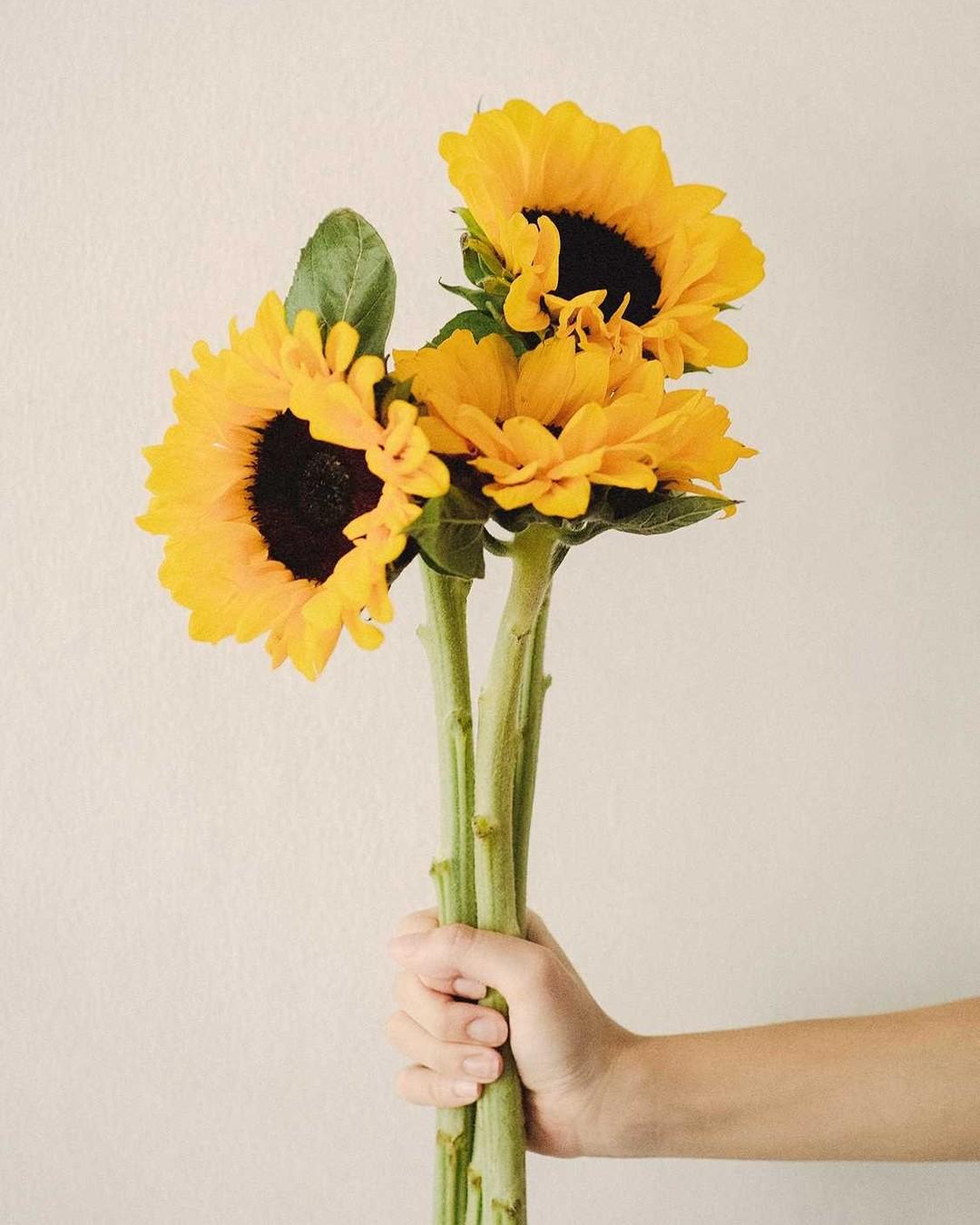 A czy w Twoim ogrodzie już zakwitły małe słońca? #słoneczniki #sunflowers #sunflower #kwiaty #lato #photography #wakacje #poland #summer #słonecznik #polska #warsaw #photo #flowers #kolory #love #sierpień #spring #nature #dress #flowerpower #instapic #follow #beautiful #bukiet #likeit #instaphoto #ogród #flowerstagram #kochamlato