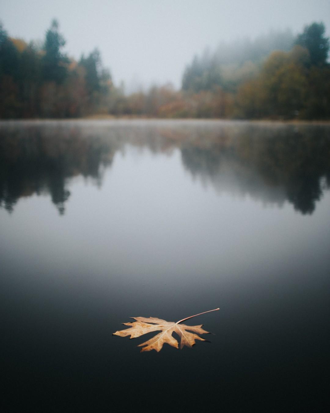 Takie klimaty... #smutnoiźle #sadmood #imangry #autumnmood #falldepression #notinbestmood #jesień #jesiennie